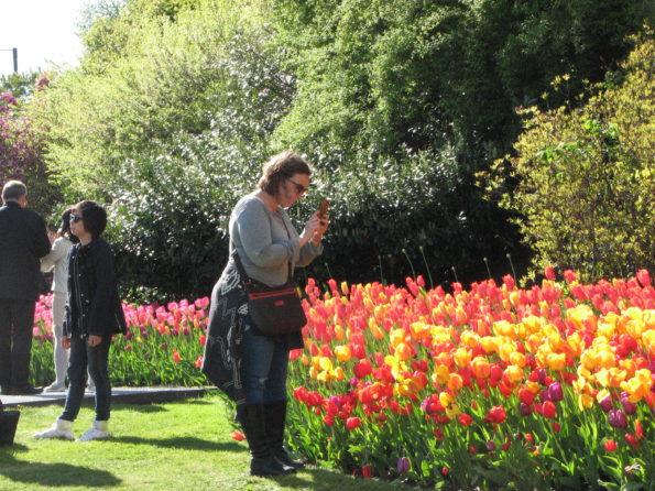 Prepare you winter garden for spring flowers