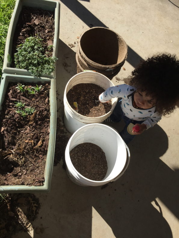 teach your kid about the nutrition found in food from your own garden
